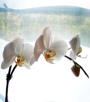 http://midnightknitter.com/blog/wp-content/uploads/2006/07/lacemohair-flower.jpg
