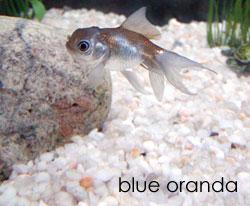 http://midnightknitter.com/blog/wp-content/uploads/2007/02/fish32.jpg